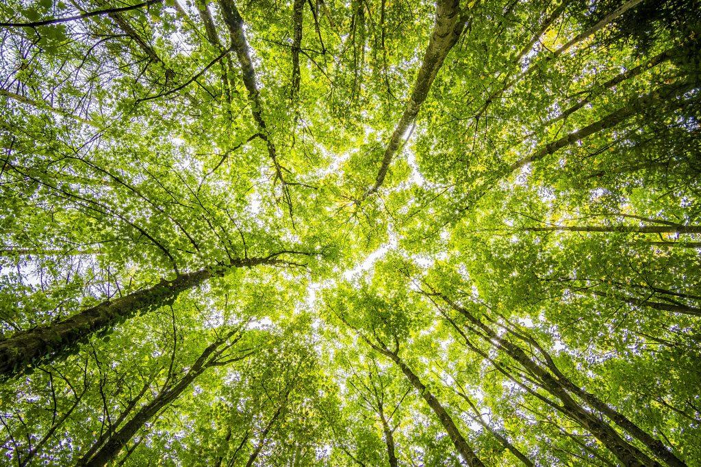 https://www.teko.se/aktuellt/kalendarium/key-enabling-technologies-for-a-sustainable-future-swedish-finnish-seminar-on-bioeconomy/