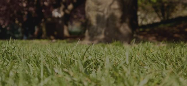 teko-grass